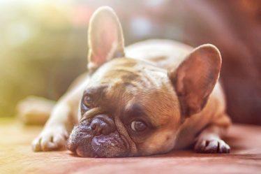 Zbilansowana dieta psa - jak zacząć?