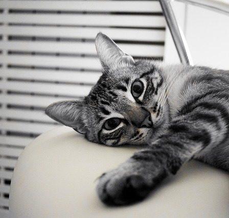 Domki dla kotów